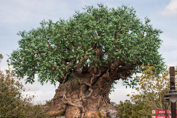 1-Animal Kingdom Africa
