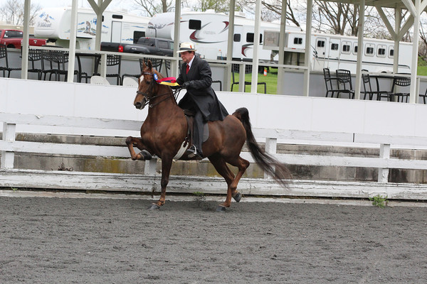 092 ADP All Day Pleasure Senior Horse 10 Years & Older E-W 2 Gait