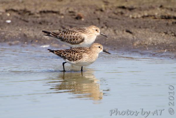 2010-09-17 Riverlands Migratory Bird Sanctuary