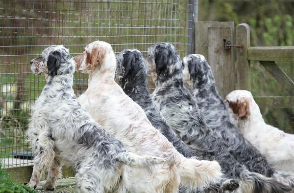 Pet Dog-Kennel-Website-Redhara.jpeg