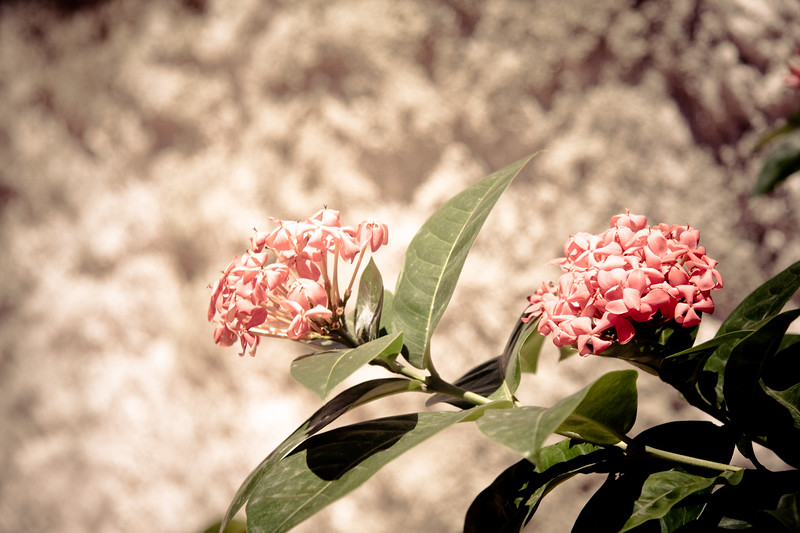 too-hot-for-the-flowers_5053019684_o.jpg