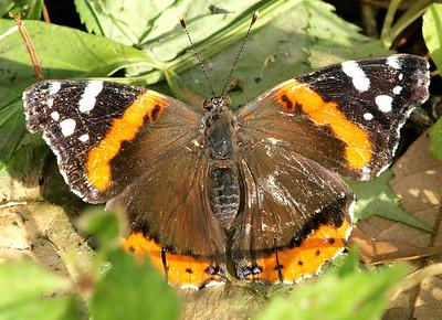 Butterflies misc gallery