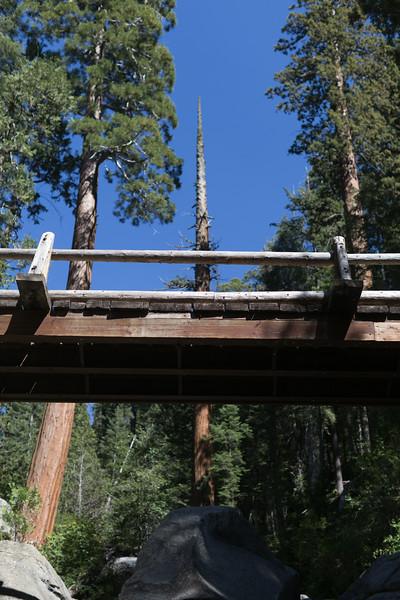 Sequoia_0444.jpg