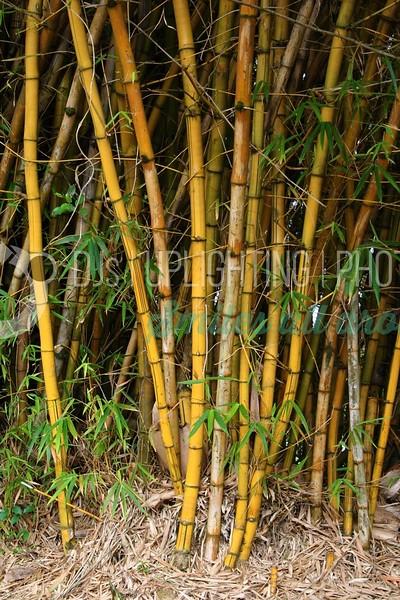 Bamboo_batch_batch.jpg