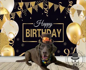 Moose's 12th birthday!