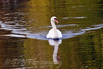 Rooksbury Mill Lake - September 2009