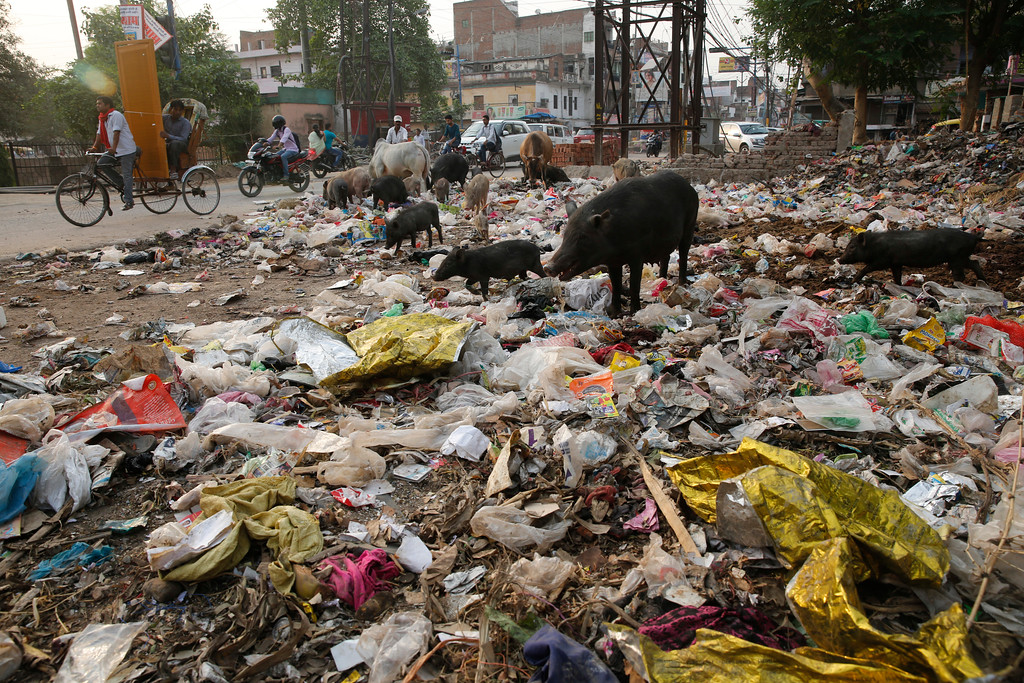 ". In this Sunday, June 3, 2018 photo, pigs and cows feed off garbage dumped by the side of a road in Allahabad, India. The theme for this year\'s World Environment Day, marked on June 5, is ""Beat Plastic Pollution.\"" (AP Photo/Rajesh Kumar Singh)"