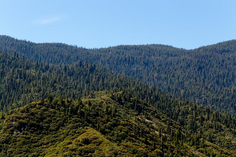 Sequoia_0060.jpg