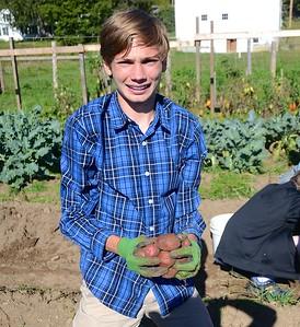 Harvesting Potatoes At Hildene photos by Gary Baker