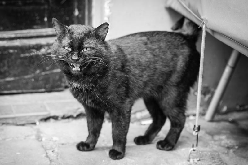 The Cat Behemoth