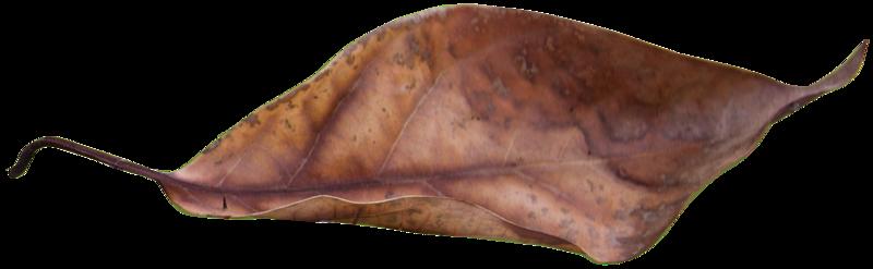 leaf 9.png