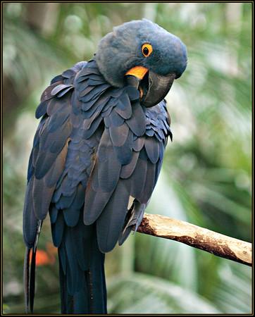 3-11-2006 Wild Animal Park