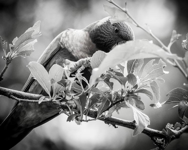 121818  birds  _12.JPG
