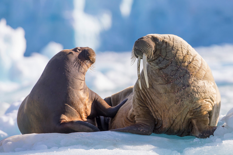 20180812_Svalbard-3645_TimoTammisto.jpg