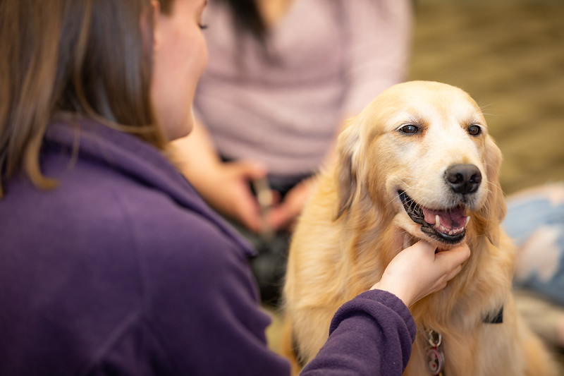 Therapy Dogs Sassy-7162.jpg
