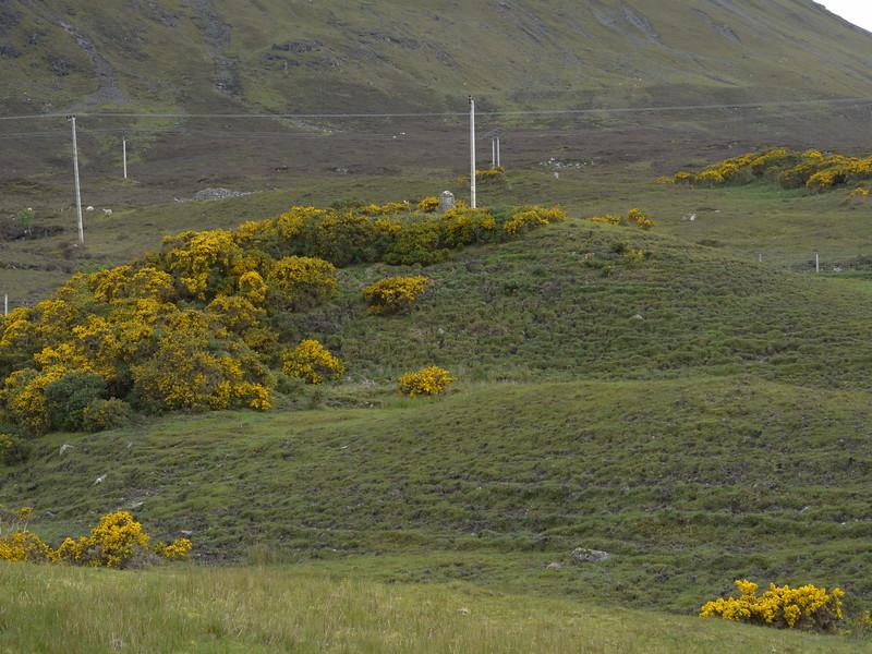 @RobAng Juni 2015 / Sconser, Isle of Skye / Eilean a'Cheo Ward  (Inner Hebridies), Scotland, GBR, Grossbritanien / Great Britain, 25 m ü/M, 2015/06/19 16:44:09