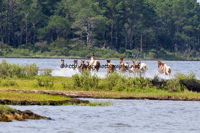 Northern Herd Roundup