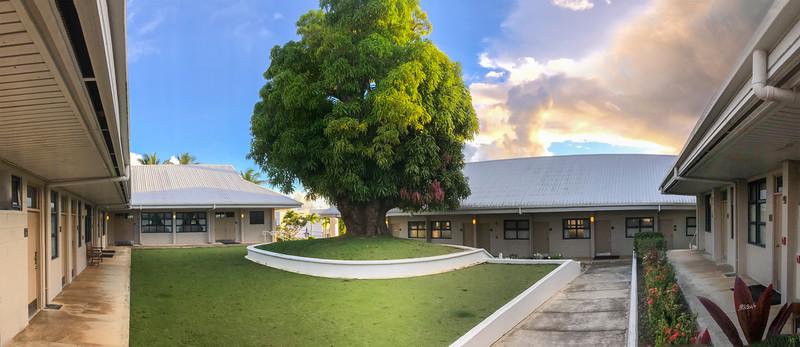 18May24 Church Mango Tree