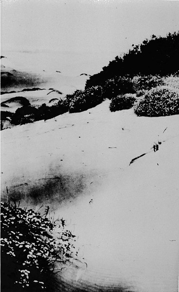 Sand Dunes of Golden Gate Park, Late 19th Century