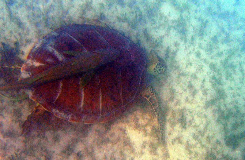 sea-turtle03.jpg