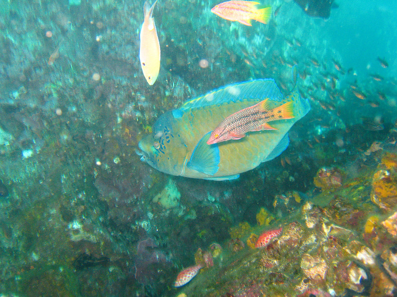 Diving in the Galapagos (212 of 392)