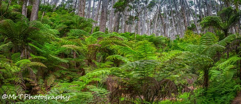 Fern bush Kawau Island