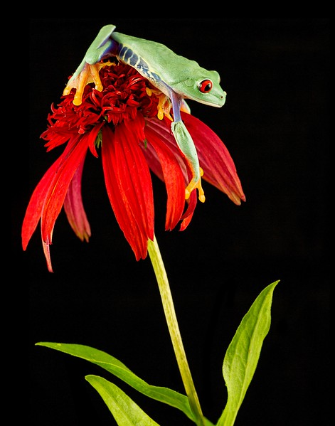 Frogscapes018_Cuchara_4170_081512_195611_7DL.jpg