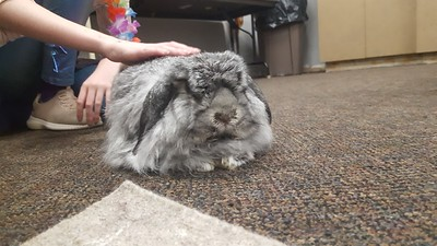 Animal Allies and the Rabbit Rescue of Alabama