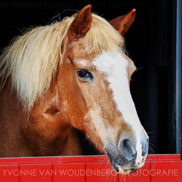 14_Paard Soest (1 van 1).jpg
