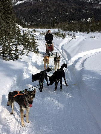 Alaska Dog Sledding and Chena, 3/11/17 - 3/18/17