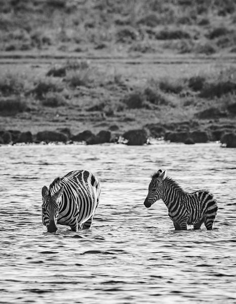 Tanzania_Feb_2018-356.jpg