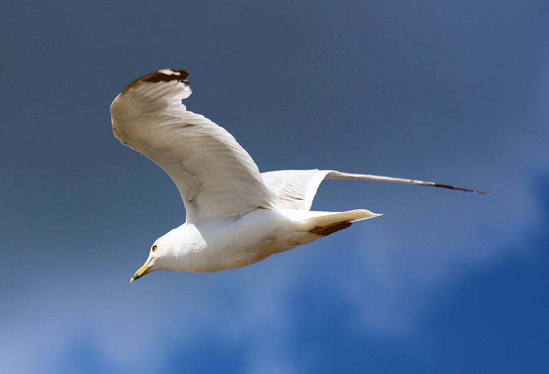 Yet another gull flies overhead.