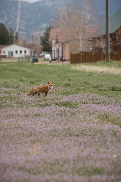 Wildlife 5 May