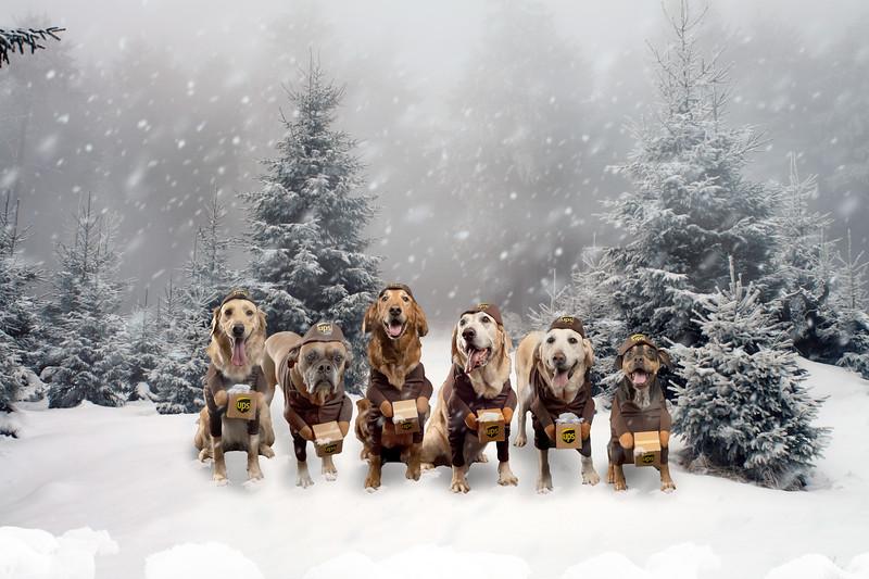 UPS Dogs Trees.jpg