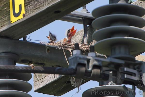 Birding 2011 July