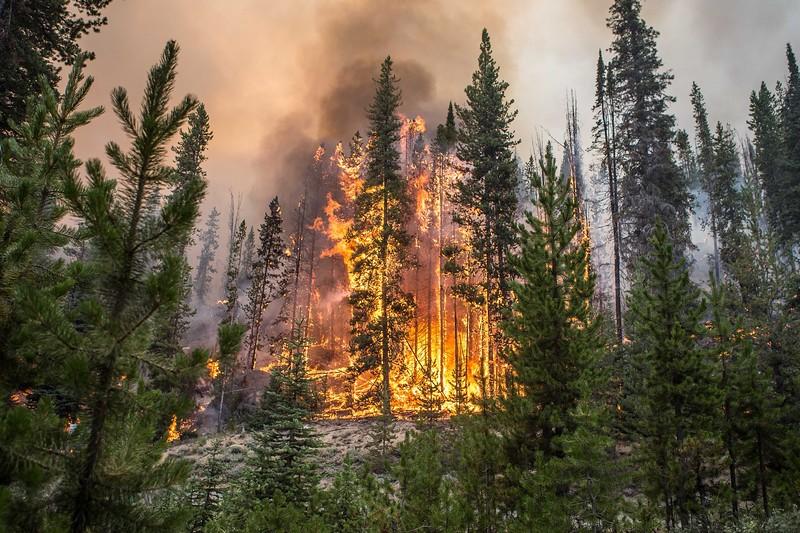 Aug 7 2019_Nethker Fire Crossing Burgdorf Road14.JPG