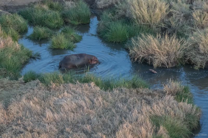Hot Air Balloon Ride hippo in pond -6188.jpg