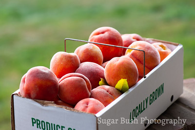 Hillcrest Orchard Fruits and Trees