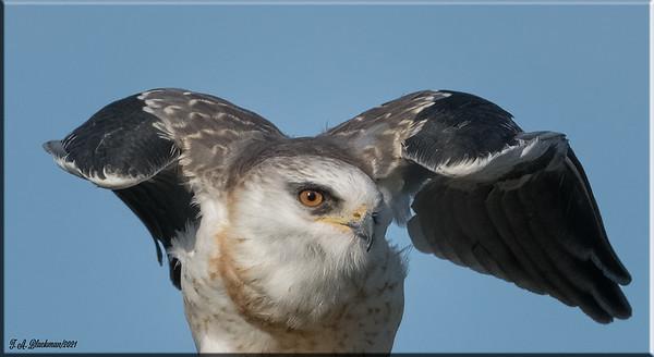 2021 Birding, AOU Area