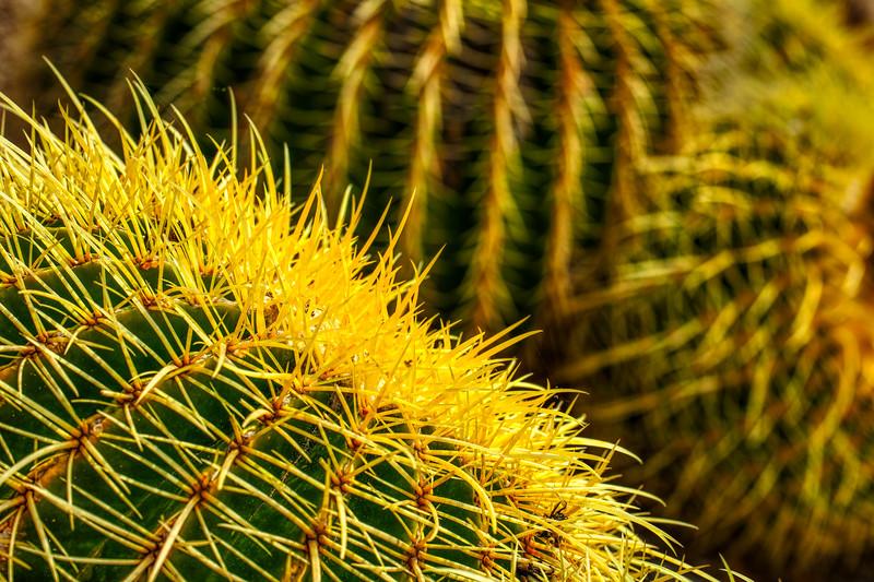Cactus Garden 3, Stanford University, 2010