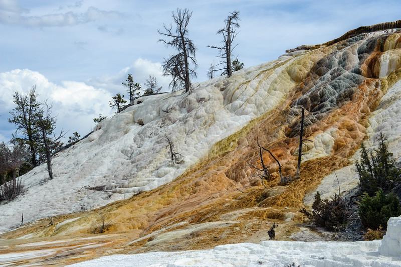 20130511-12 Yellowstone 118.jpg