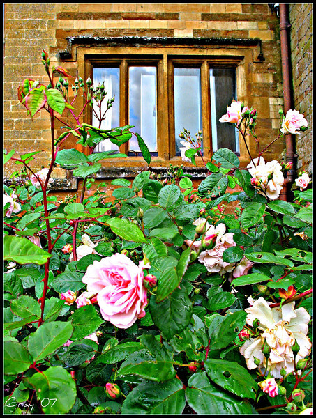 New Roses, Wroxton Abbey 