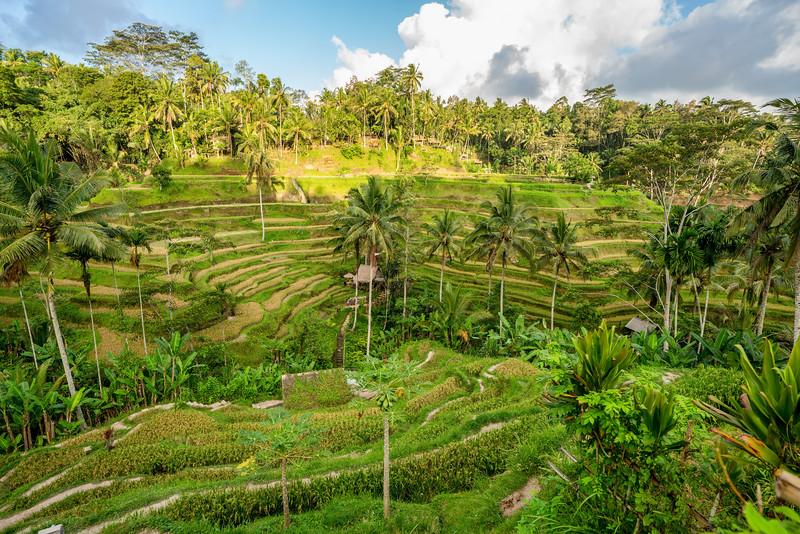 Bali-19.jpg