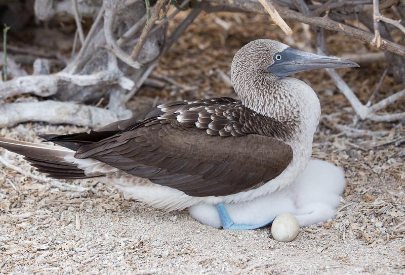 Galapagos_MG_4162.jpg