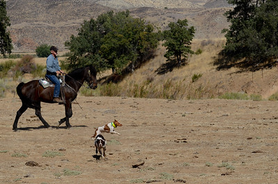 Southern San Joaquin Valley Field Trial at Spanish Ranch October 2012