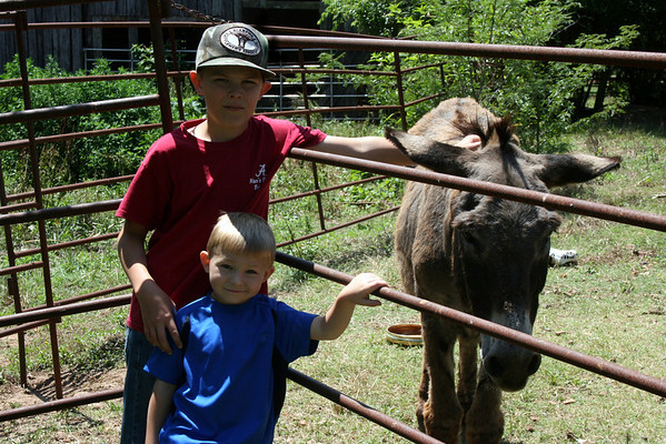Luke Mason Donkeys June 2012