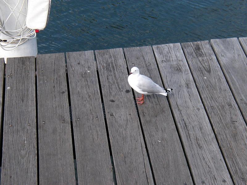 27. Darling Harbour.JPG