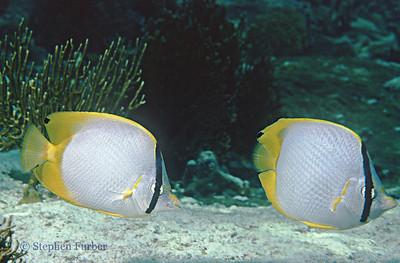 Reef Fish - Portraits