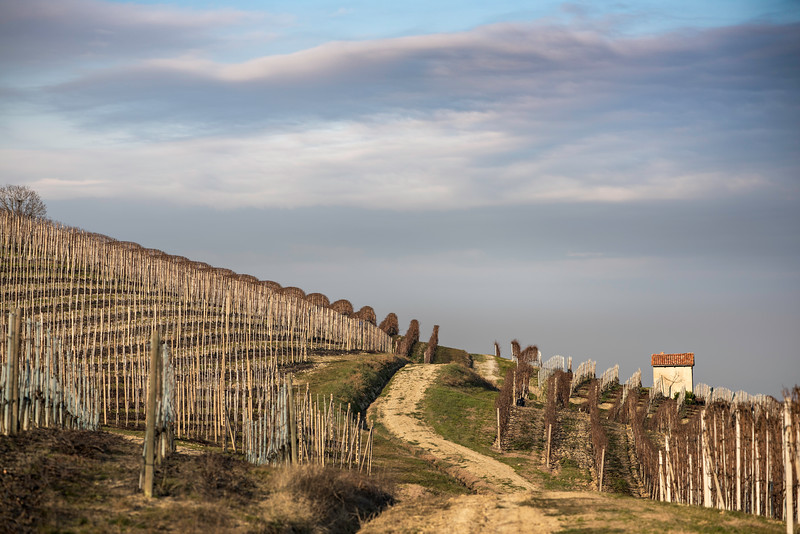 Piemont Alba 2015 Jänner