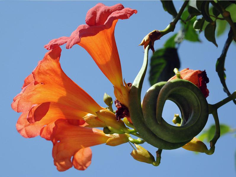20110612_Nature_058.jpg